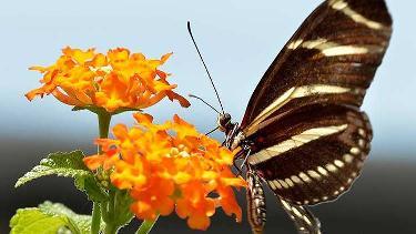 Butterflykaleidoscope list