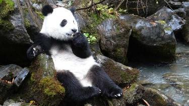 Panda3d list