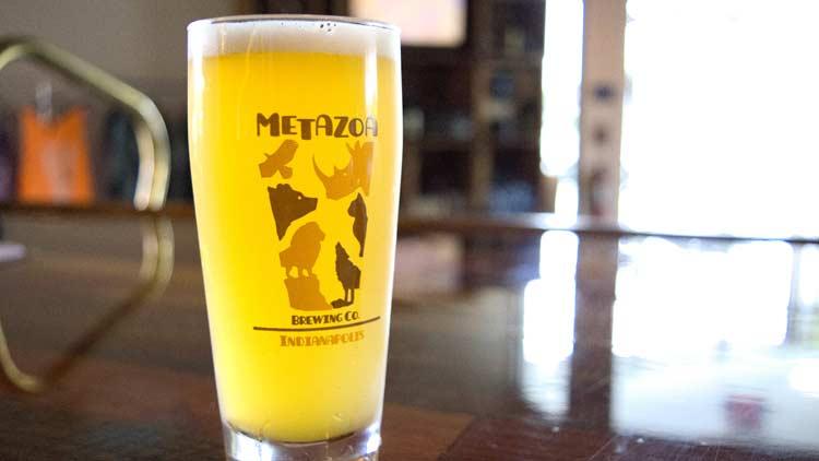 Metazoa04