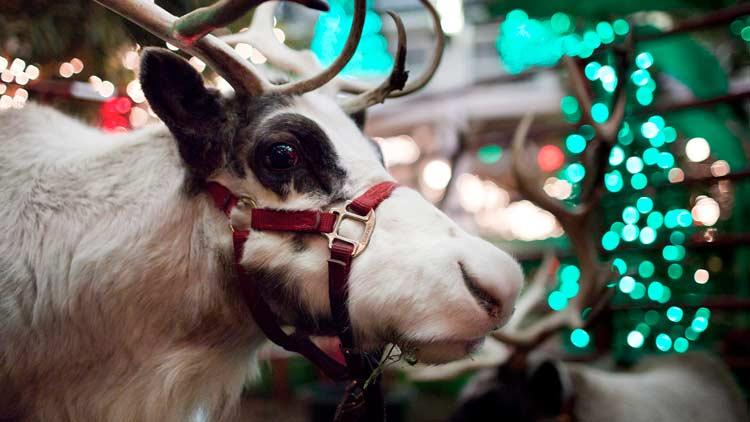Christmasatthezoo18 06