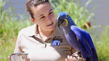 Macaws04 list