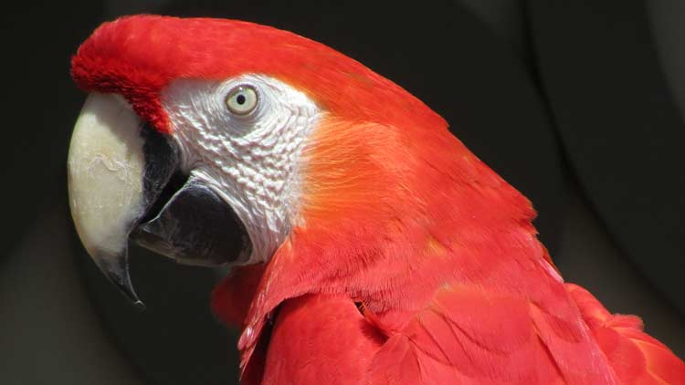Macaws05