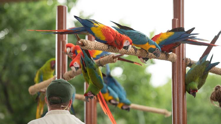 Macaws32