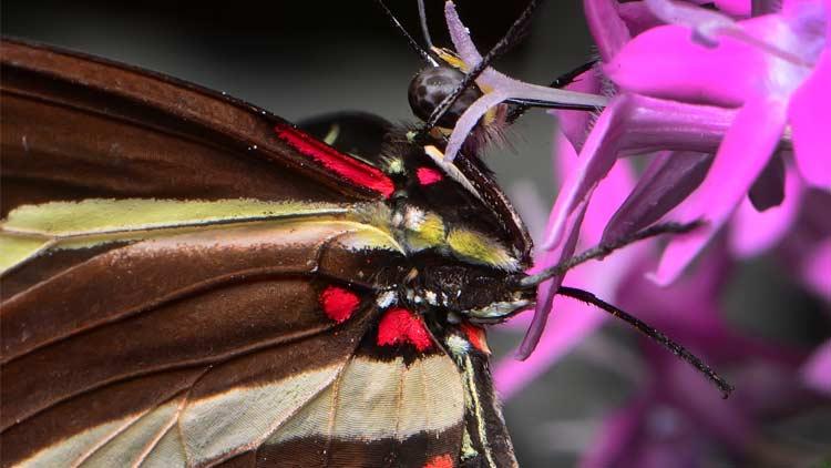 Butterfly Kaleidoscope 4