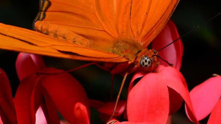 Butterfly Kaleidoscope 7