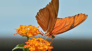 Butterflies07 list