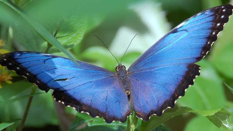Butterfly Kaleidoscope 11