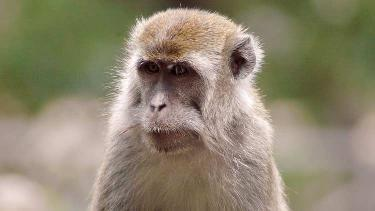 Macaques list