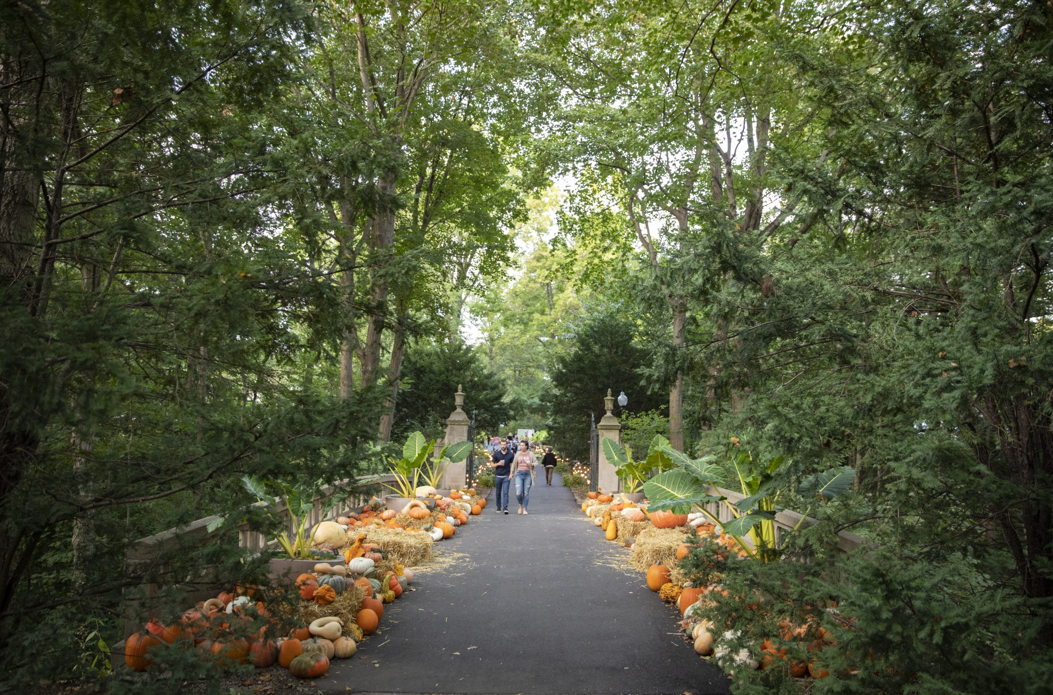 Celebrate Fall at Newfields
