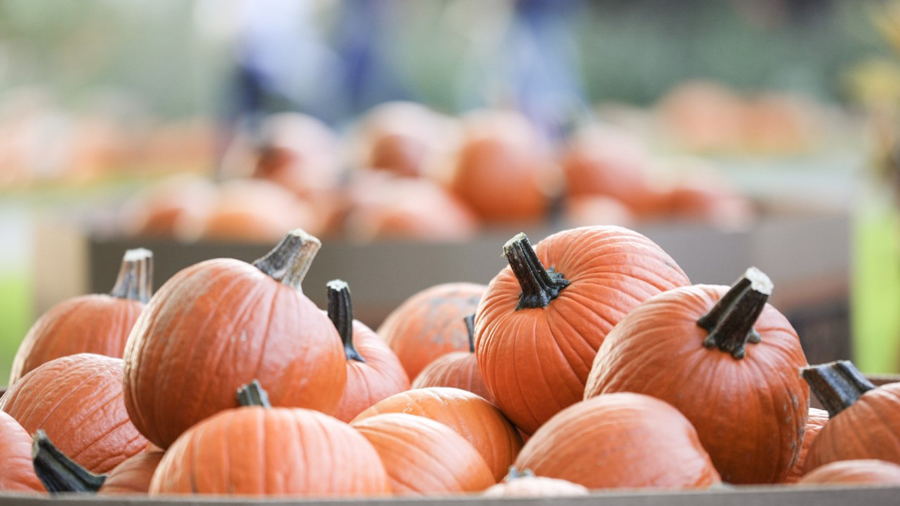 Pumpkin Patches in Indy