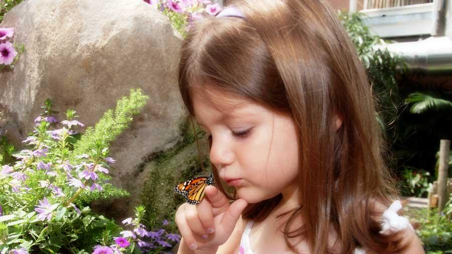 Butterfly Kaleidoscope 13