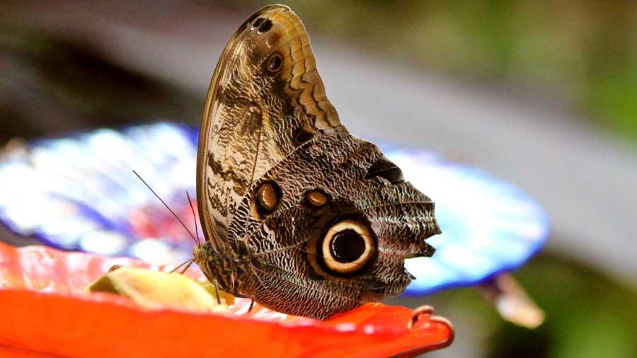 Butterfly Kaleidoscope 16