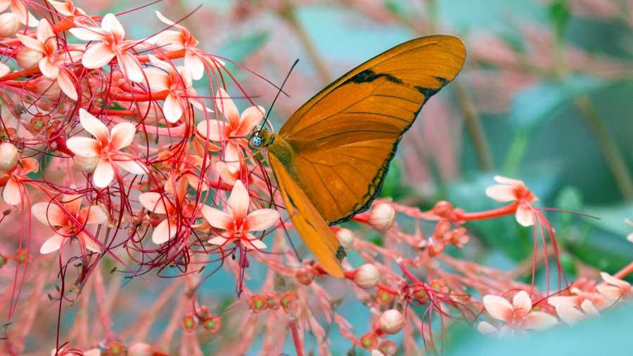 Butterfly Kaleidoscope 19