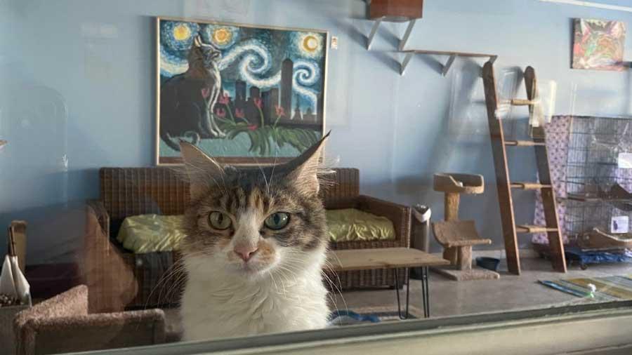 Nine Lives Cat Cafe 2