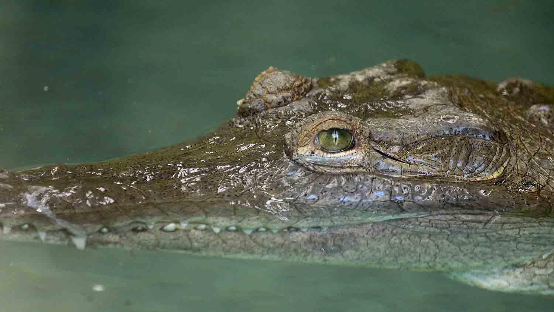 Alligators & Crocodiles - The Fight to Survive 4